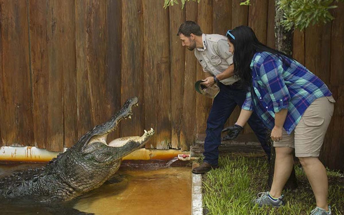 Assista ao 'School Of Croc' em transmissão ao vivo pelo Facebook no Gatorland