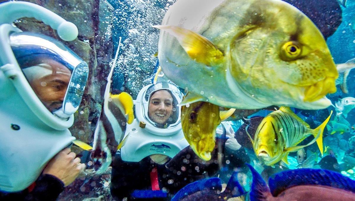 Nade com os peixes num mundo subaquático do SeaVenture em Orlando