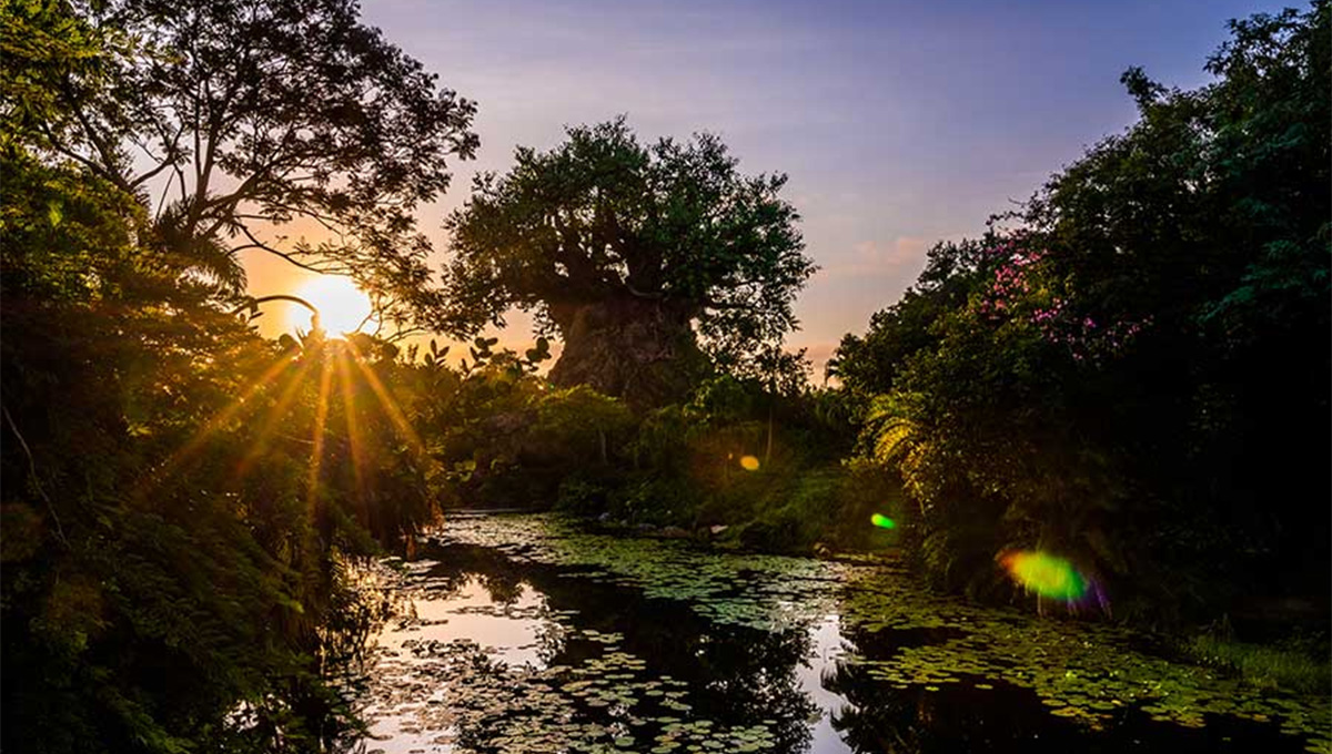 Confira o nascer do sol no parque temático Disney's Animal Kingdom no Pandora