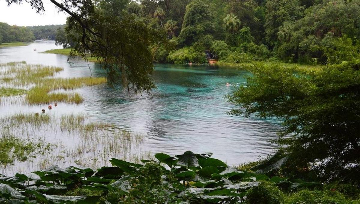 """""""Rainbow Springs Lazy River"""" foi oficialmente reaberto para passeio na Flórida"""