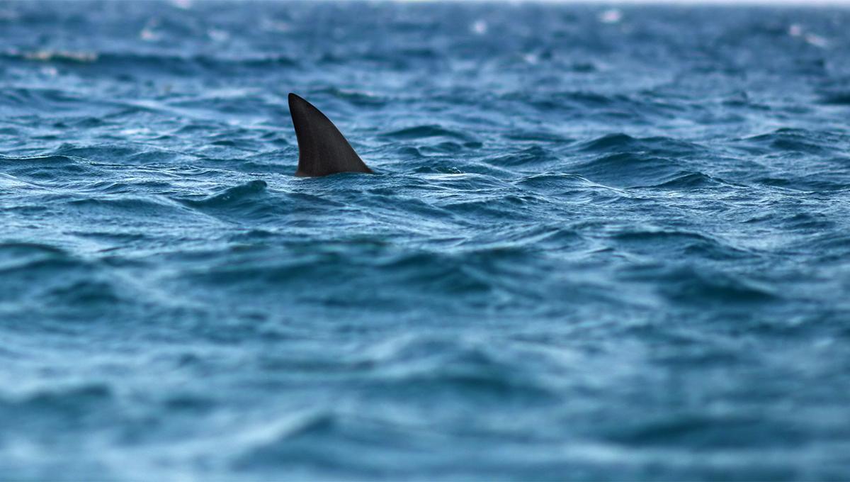 Número de ataques de tubarão aumenta na Costa de Volusia próximo a Orlando
